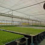 Plantalgarve_Malha térmica, extractor e bancadas